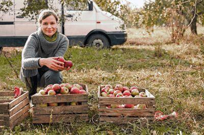 fruit afkomstig van land naar kantoor